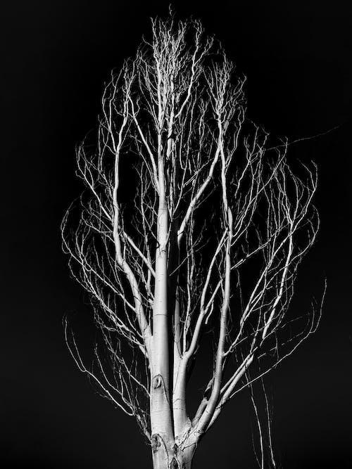 Fotos de stock gratuitas de árbol desnudo, blanco y negro, escala de grises