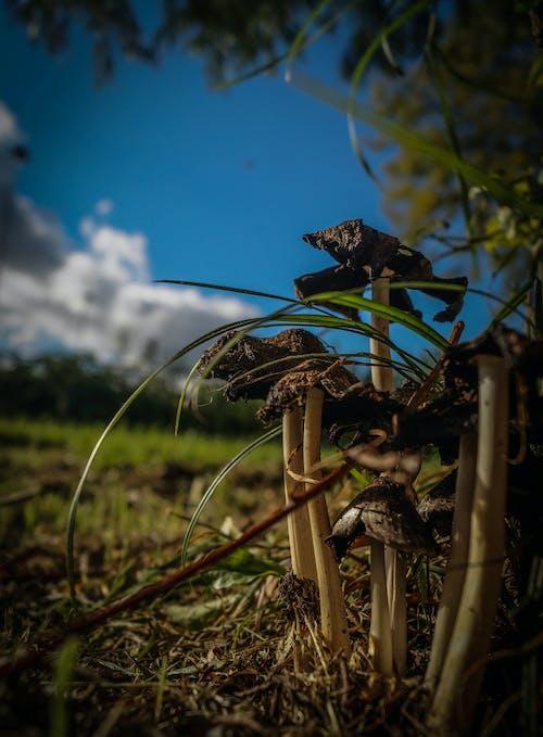 Foto d'estoc gratuïta de bolets, bosc, cel, fong