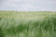summer, fields