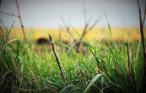 草, 露の無料の写真素材