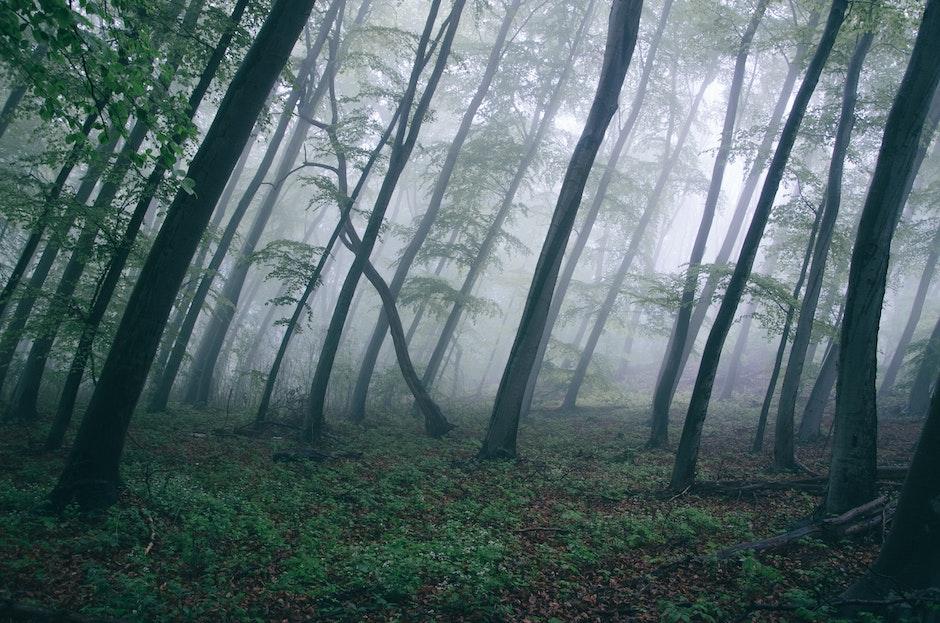 dark, fog, forest