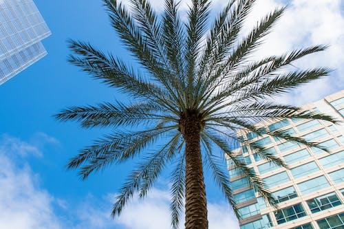 Photos gratuites de arbre, architecture, articles en verre