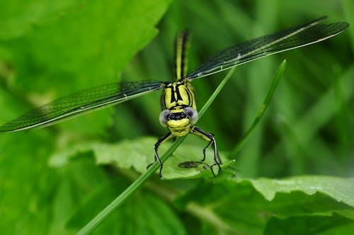 Foto profissional grátis de amarelo, ecológico, inseto, libélula