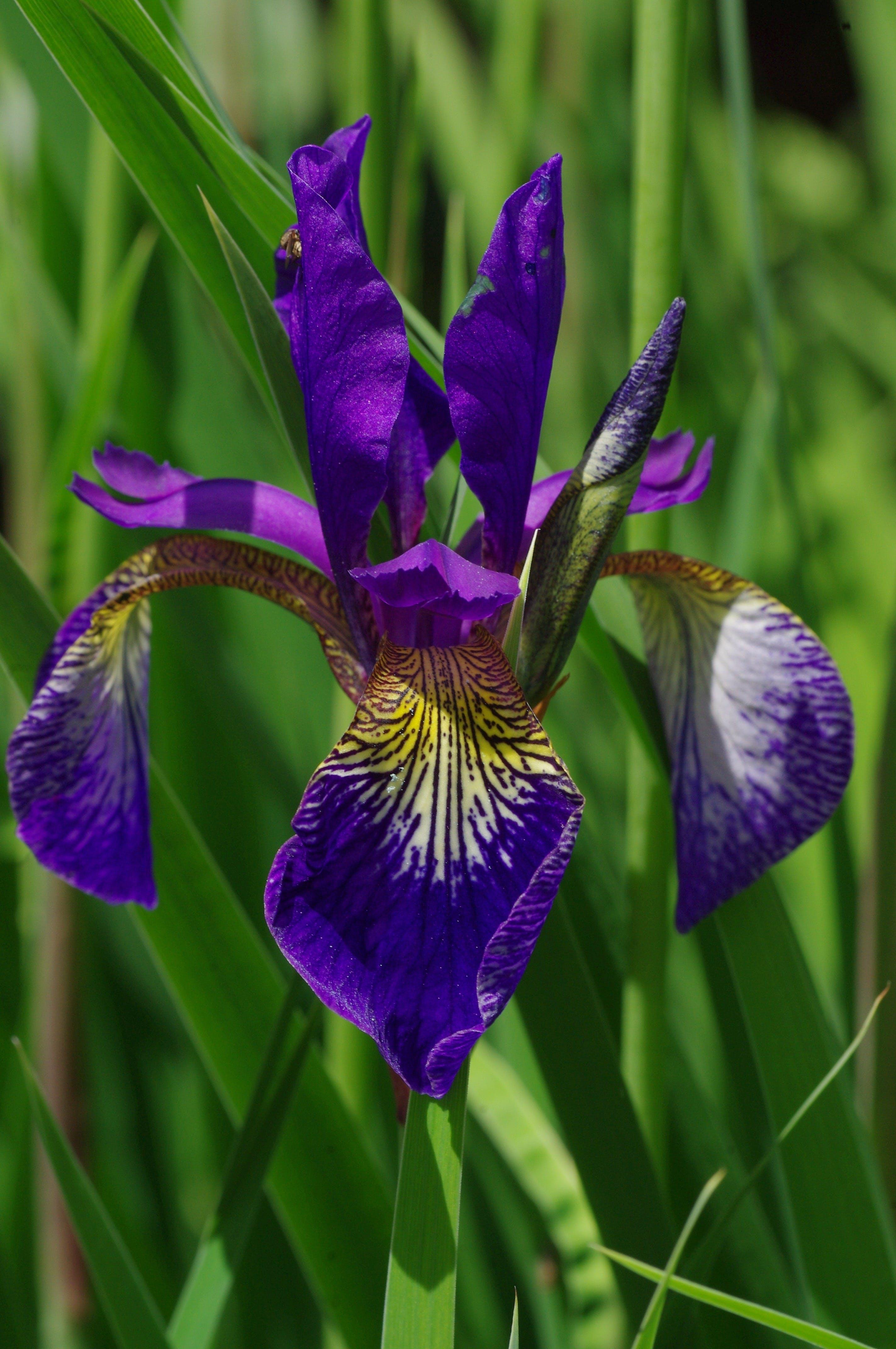 Close Up Photo of Purple Broad Petal Flower