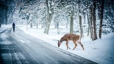 snow, road, street