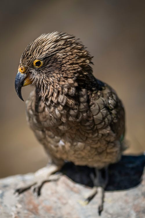Photo of a Brown Bird