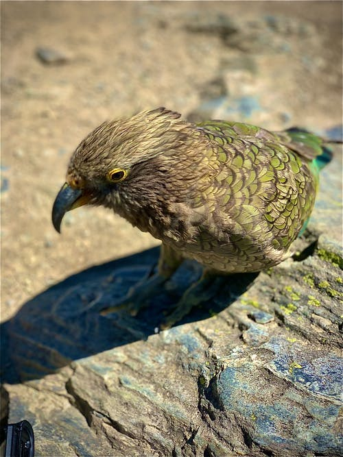 Brown and Green Bird on Gray Rock