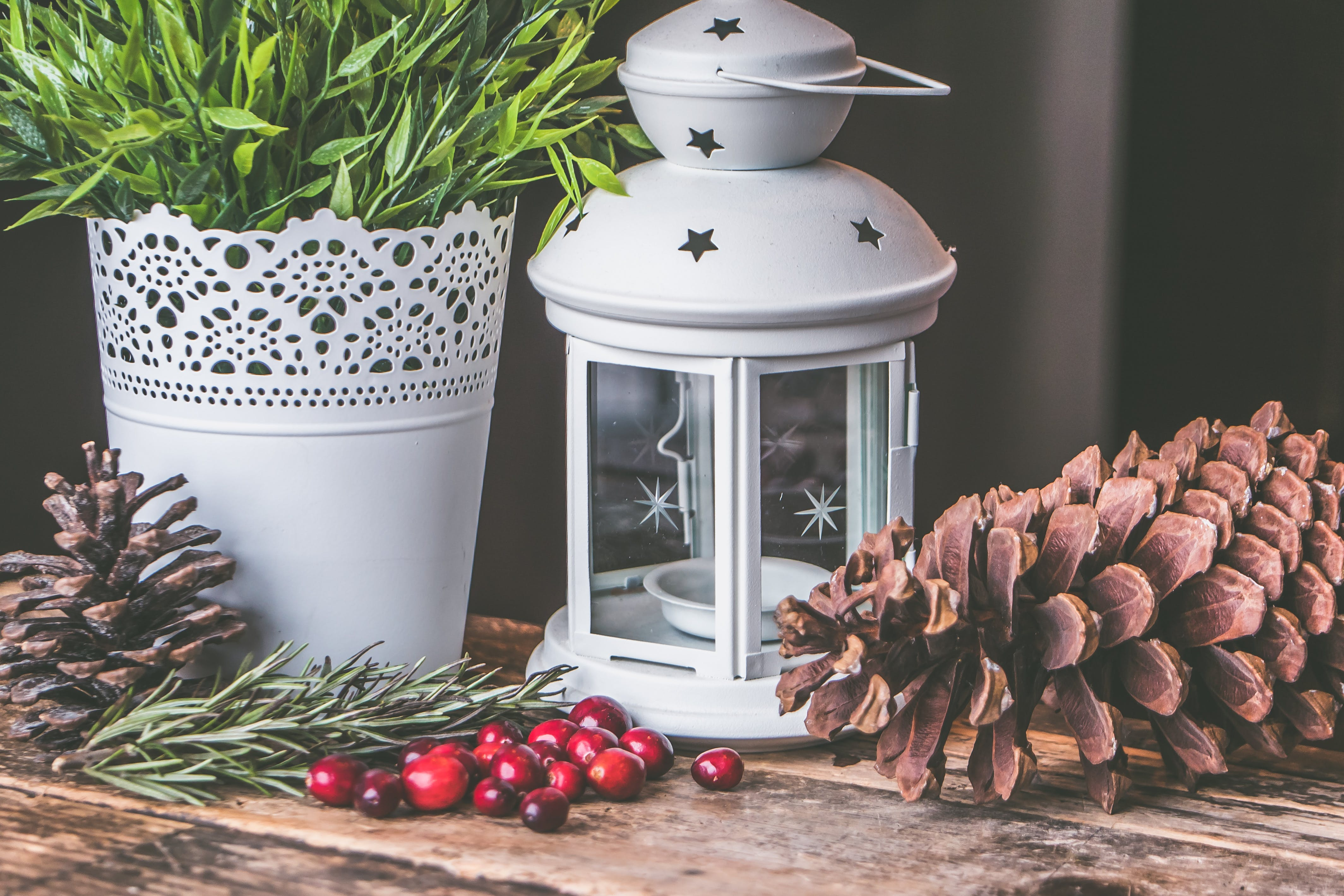 Candle Lantern Beside Pine C One and Green Leaf Plant