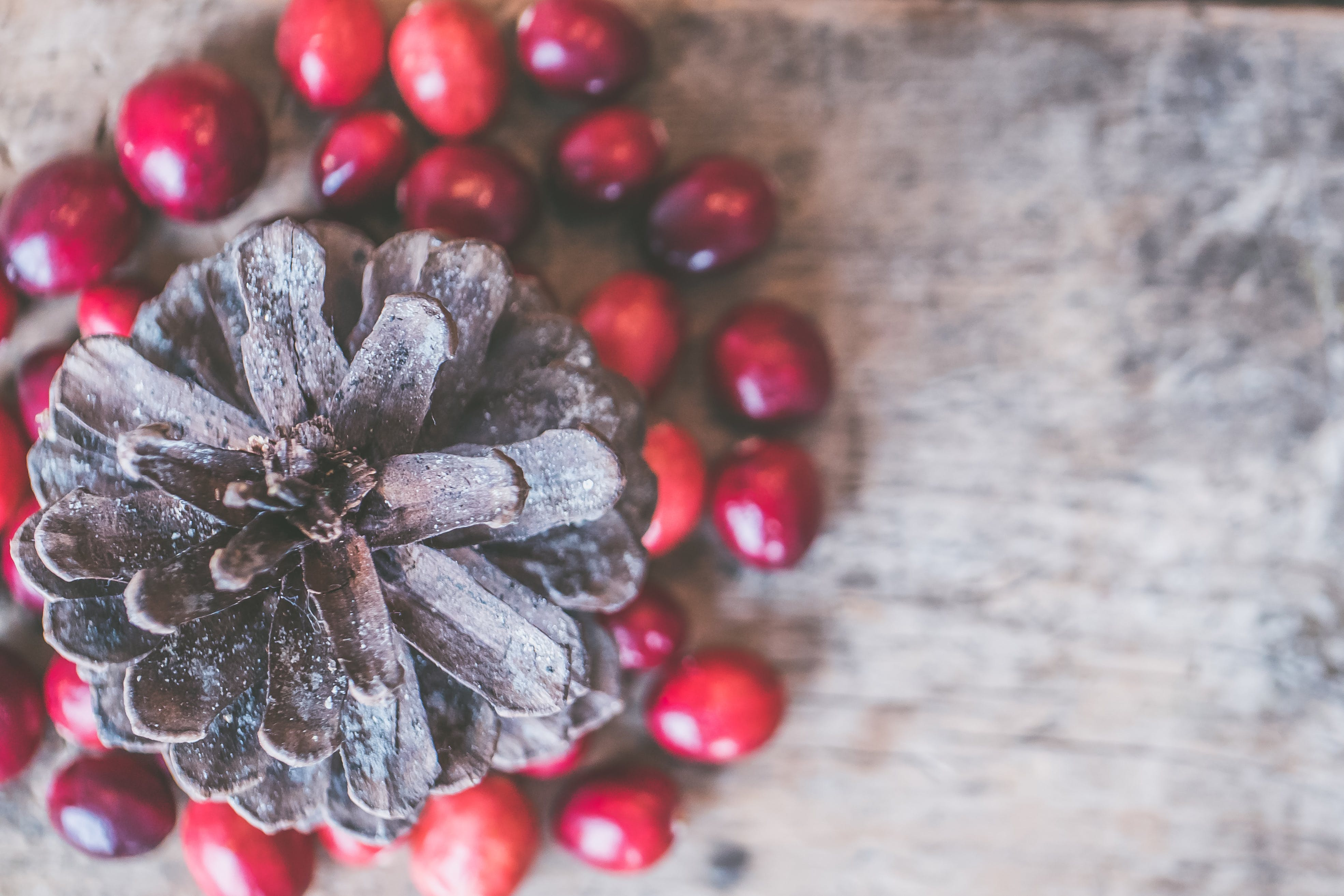 Free stock photo of background, christmas, cranberries, green