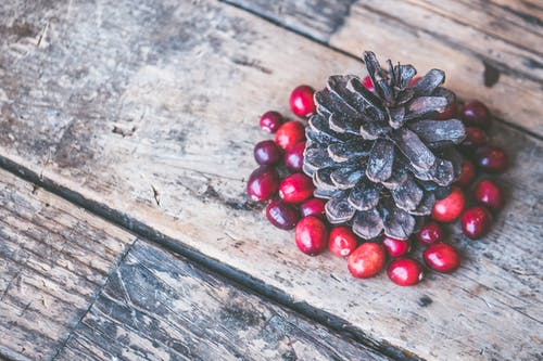 Brown Pine Cone Surrounded by Red Cranberry Photography