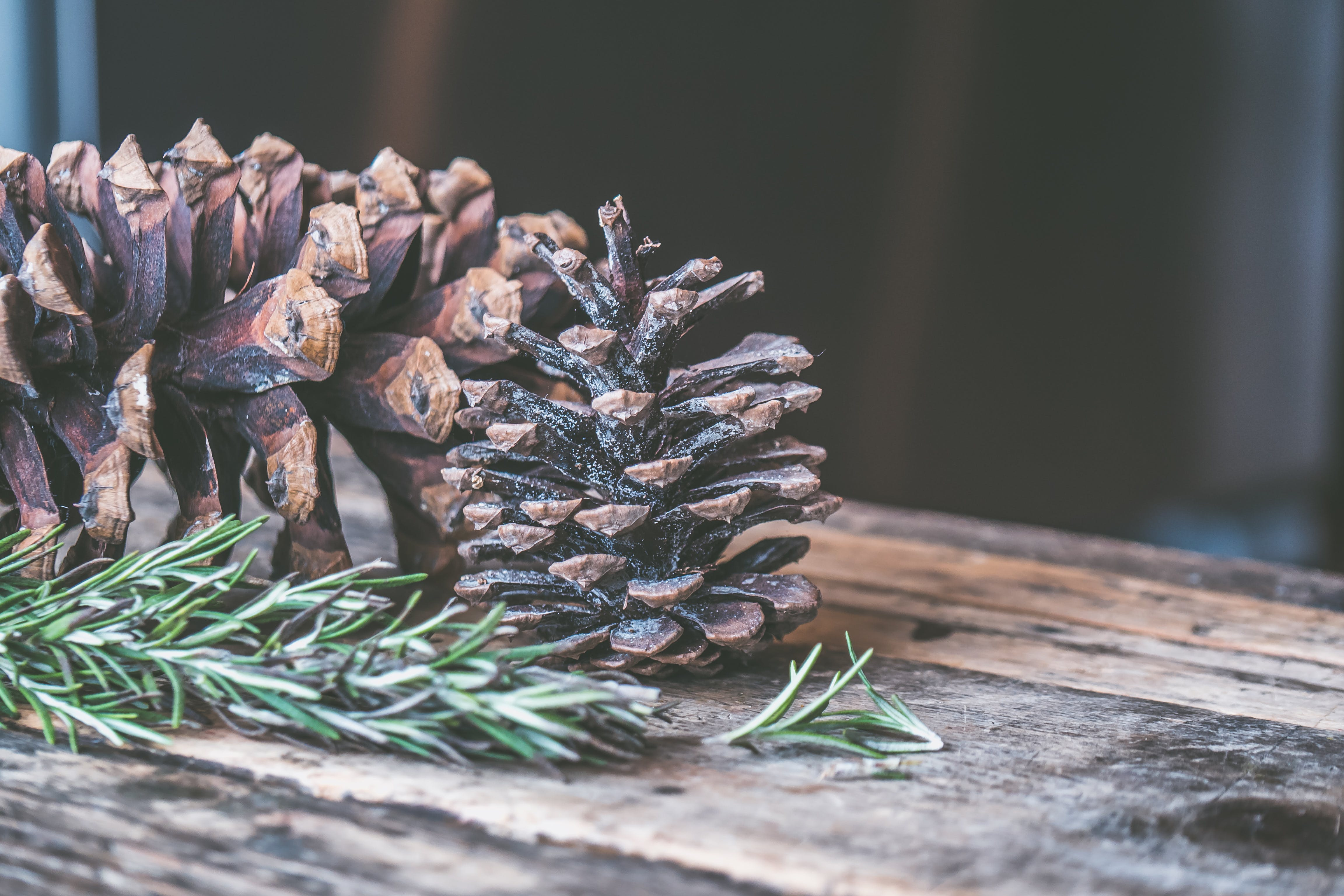 Two Brown Pine Cones on Brown Wooden Surface
