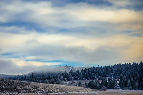 Picturesque landscape of coniferous woods growing on snowy slope covered with mist under blue cloudy sky on sunny weather