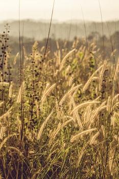 Tilt Shift Photo of Grass Fields