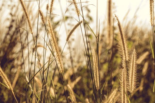 Gratis stockfoto met biologisch, bladeren, bloemen, buiten