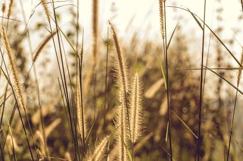 Free stock photo of environment, explore, field