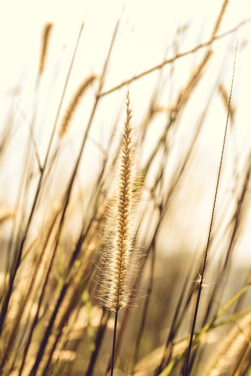 Foto d'estoc gratuïta de a l'aire lliure, camp, cel, creixement