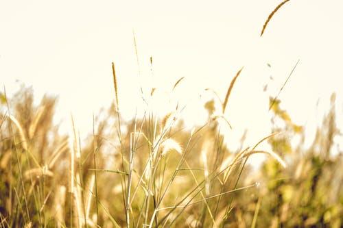 Imagine de stoc gratuită din câmp, centrale, cer, creștere