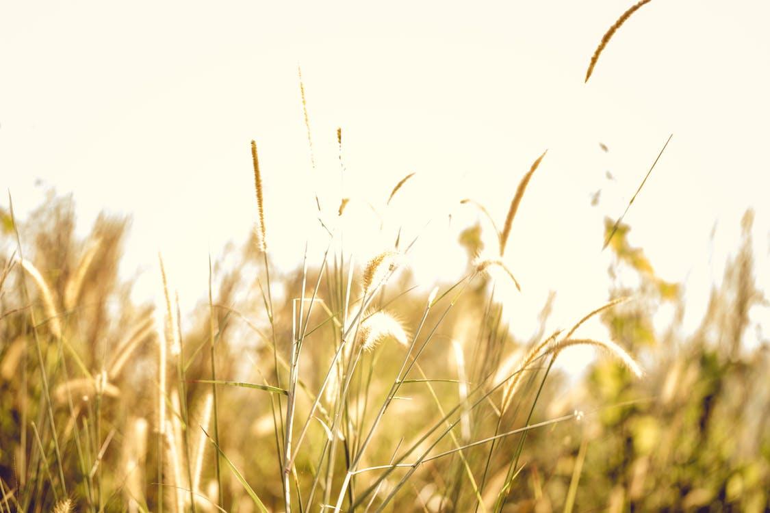 alam, alami, bidang