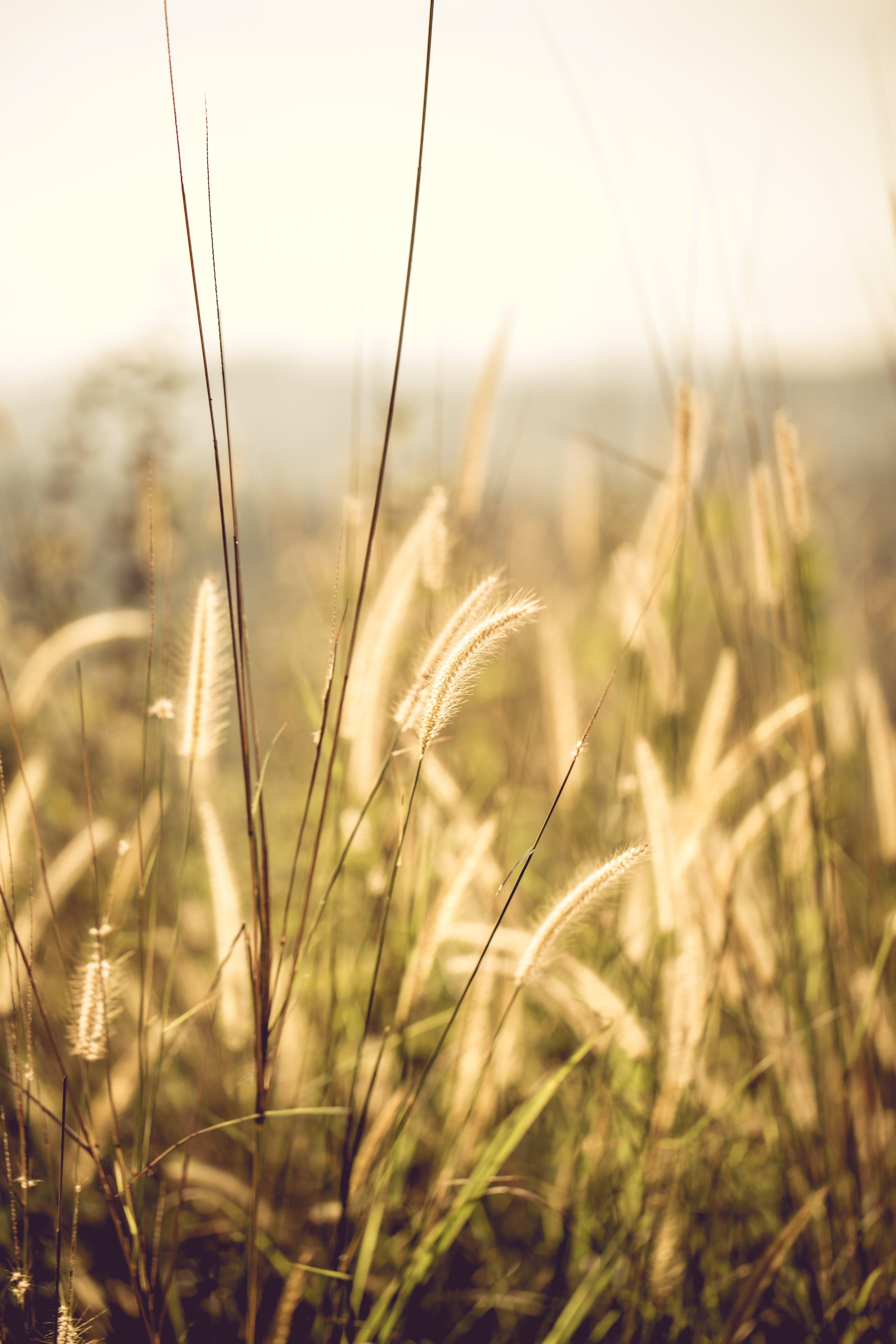 Fotos de stock gratuitas de campo, césped, cielo, crecimiento