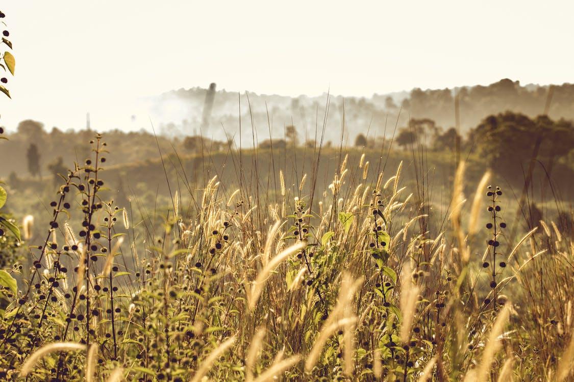 Macro Photography of Green Grass