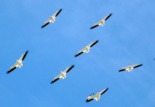 Základová fotografie zdarma na téma létání, obloha, racci, zvířata