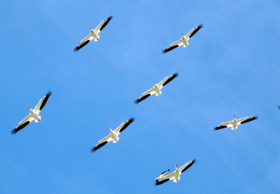 dyr, fly, himmel