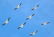 sky, flying, animals