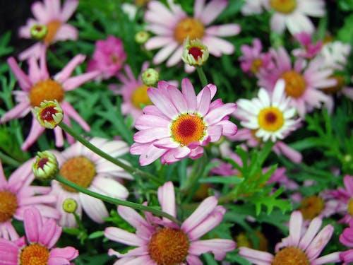 Imagine de stoc gratuită din centrale, floare, floră, flori