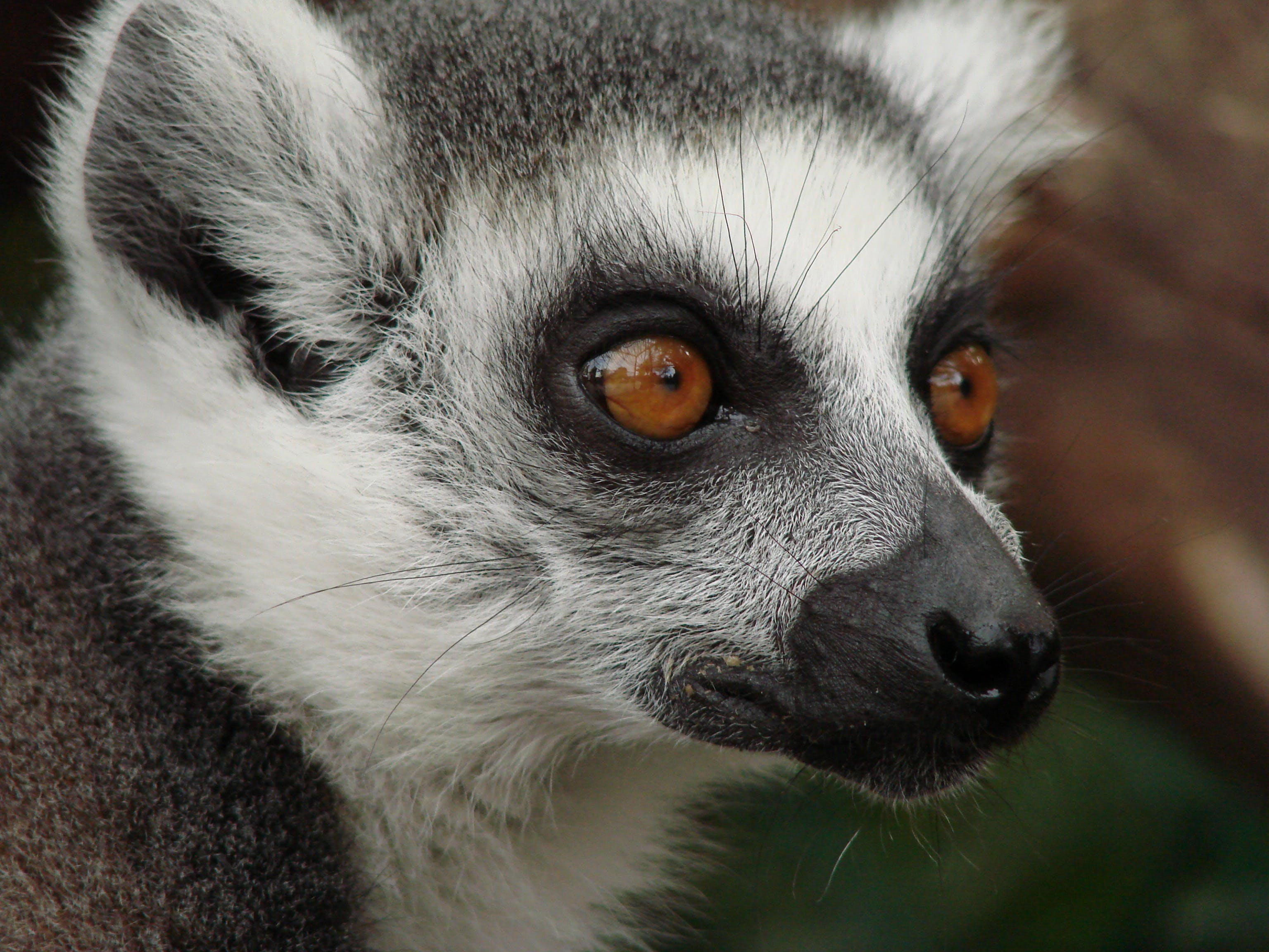 Close Up Photo of Black and White Animal