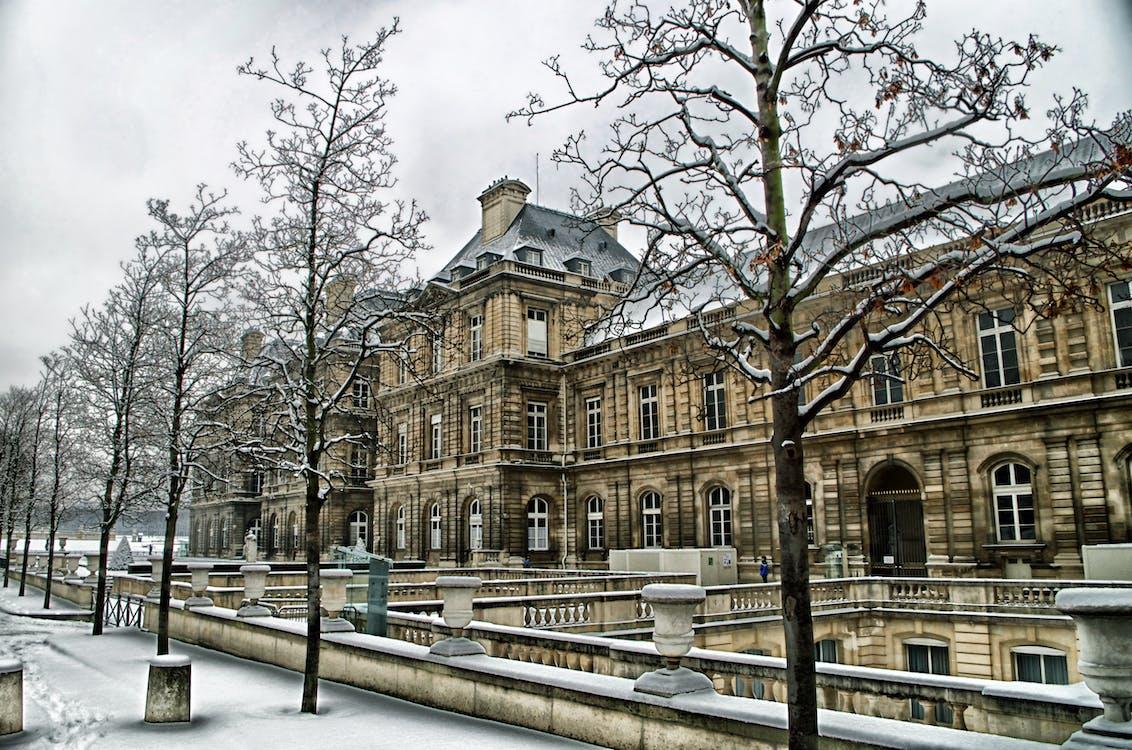 ağaçlar, bina, kar