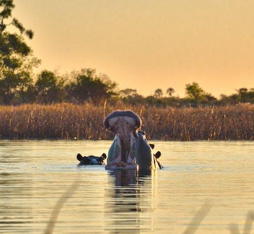 Fotobanka sbezplatnými fotkami na tému Afričan, Afričanka, africké prostredie