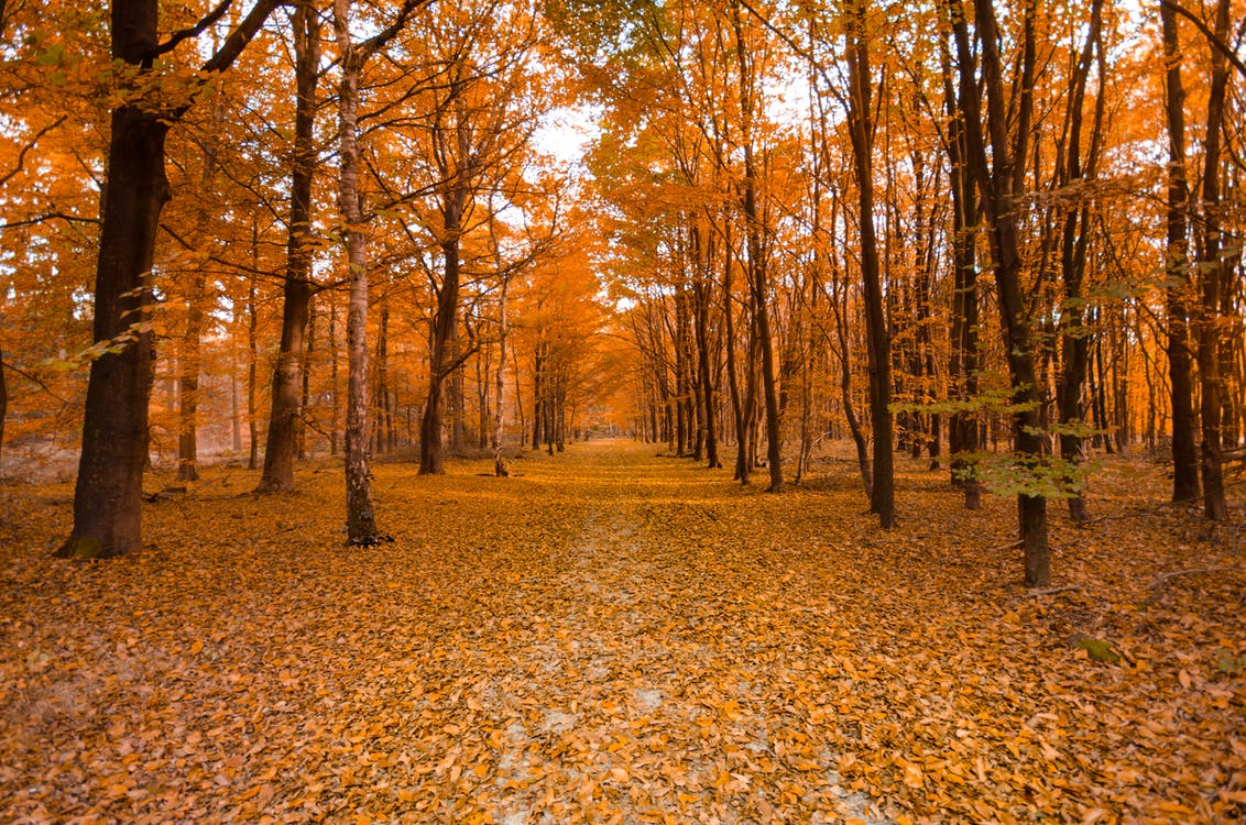 acero, alberi, ambiente