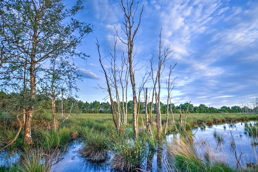 Landscape Photography of Dried Trees Surrounded With Green Grasses Under White Clouds