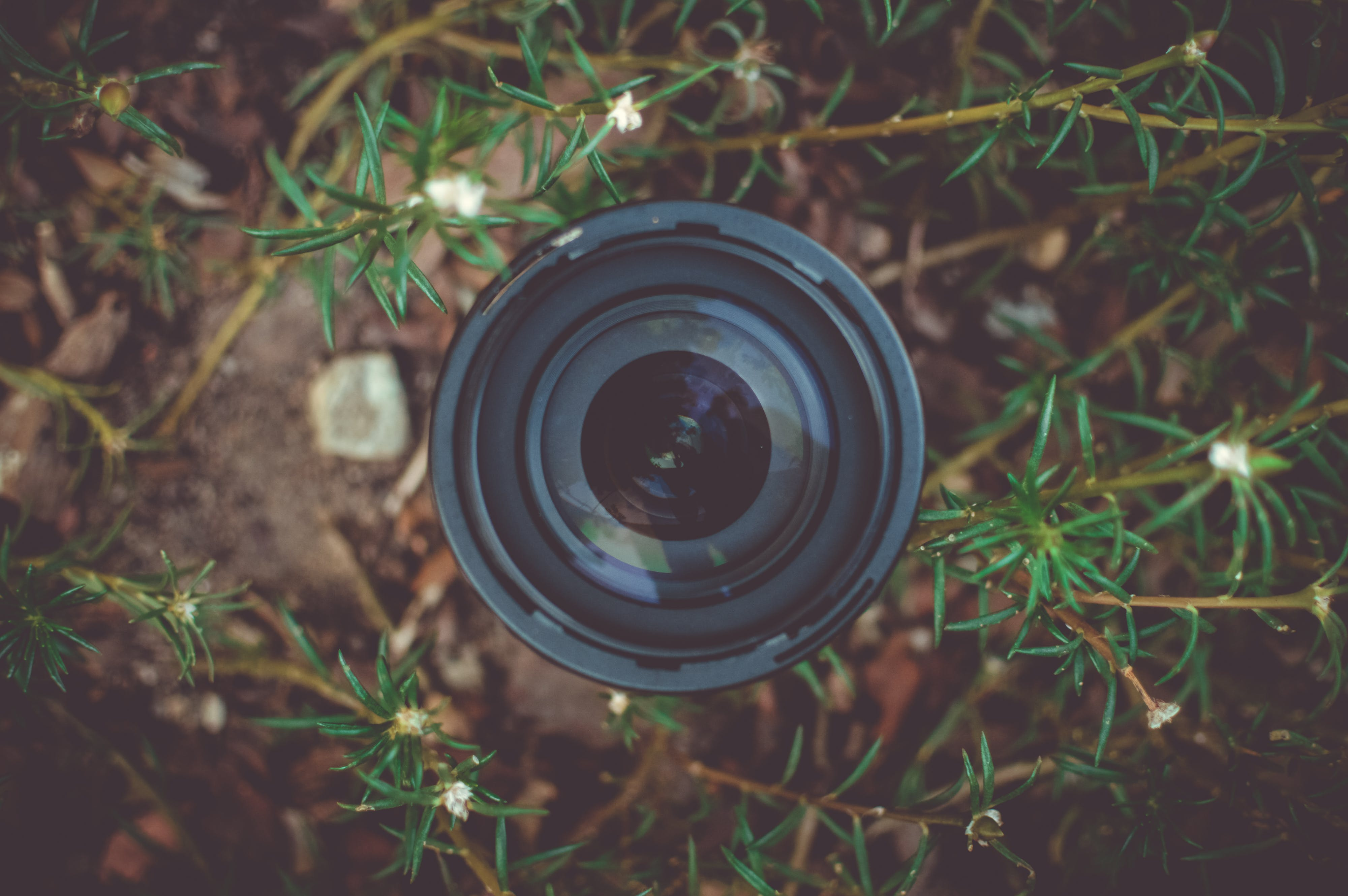 Black Dslr Camera Lens in Green Leaf Plant