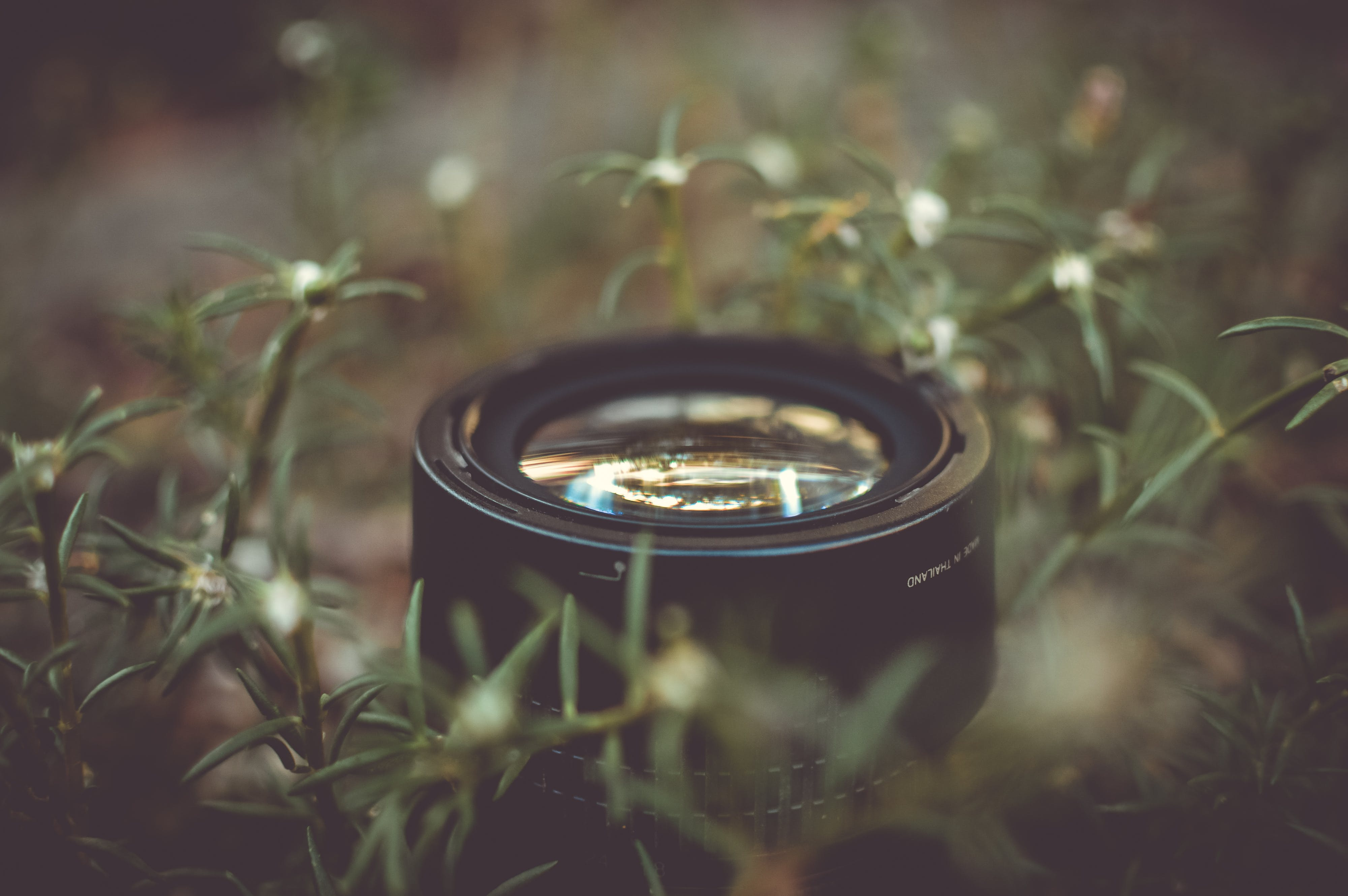 Camera Lens Surrounded by Green Outdoor Grass