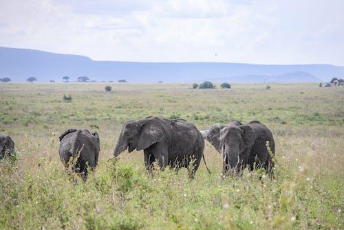 Elephant on Green Grass Field