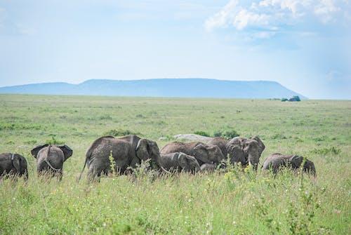 Elephants on Green Grass Field