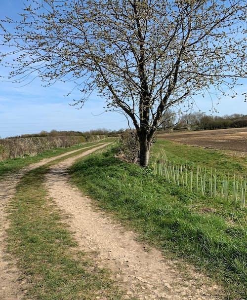 Free stock photo of countryside, lane