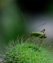 green, insect, macro
