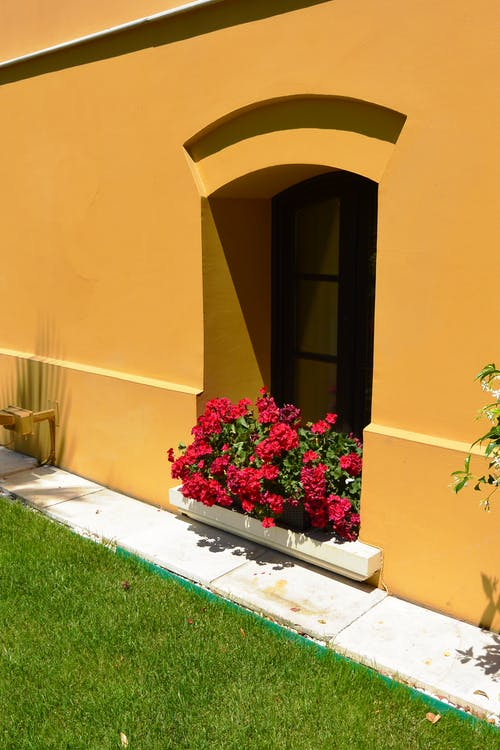 Free stock photo of arch, blooming flowers, yellow wall