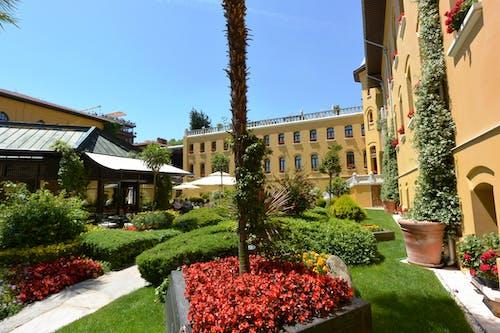 Free stock photo of courtyard, garden
