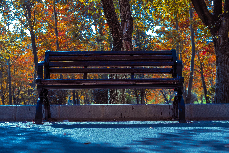 Free stock photo of beach chair, city park