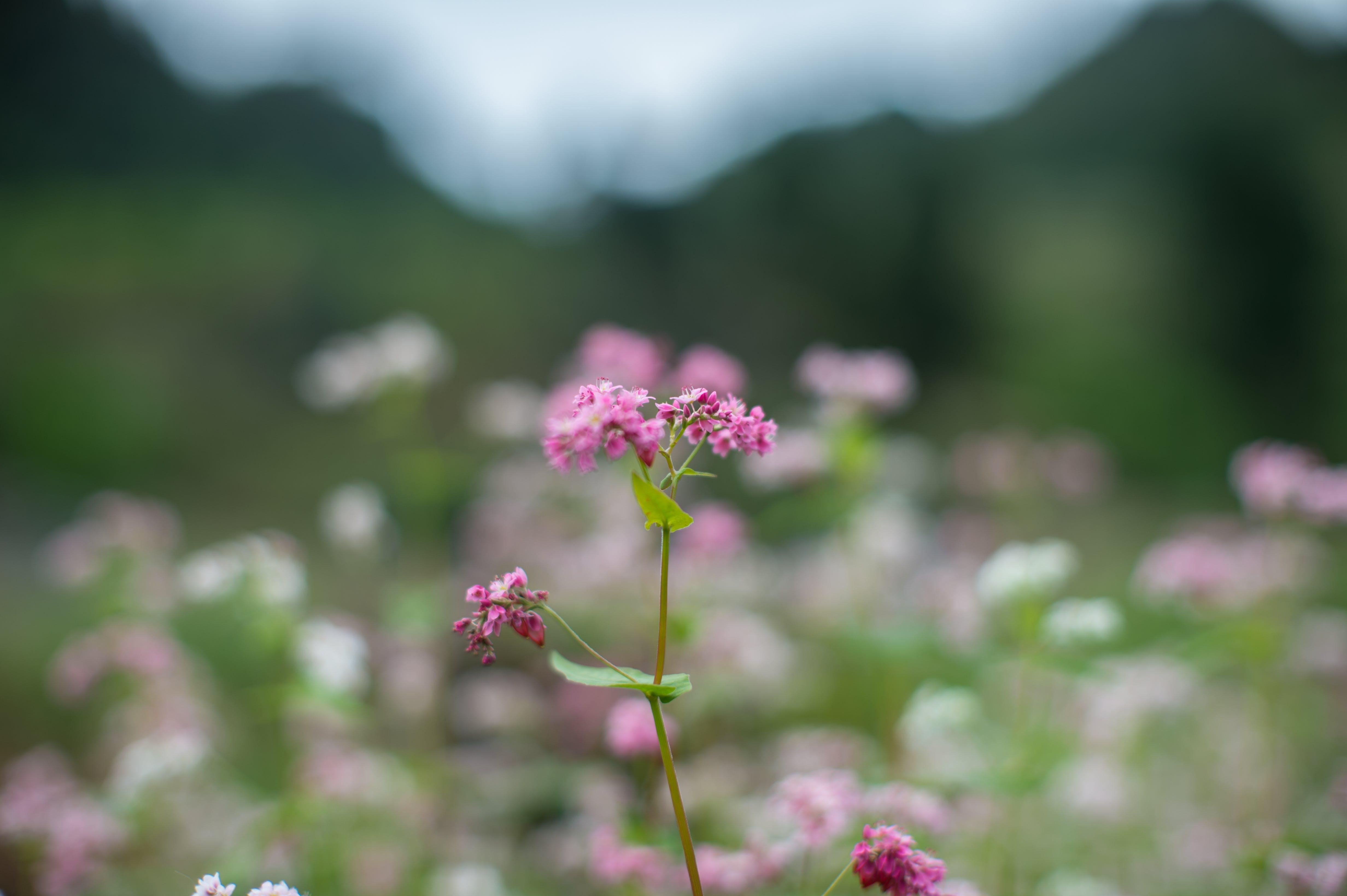 Photos gratuites de clairière, croissance, fleur, fleurs