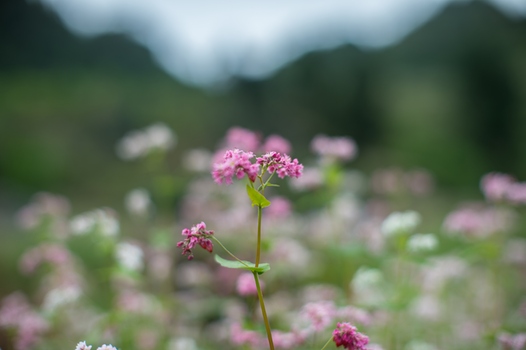 Kostenloses Stock Foto zu natur, feld, blumen, blütenblätter