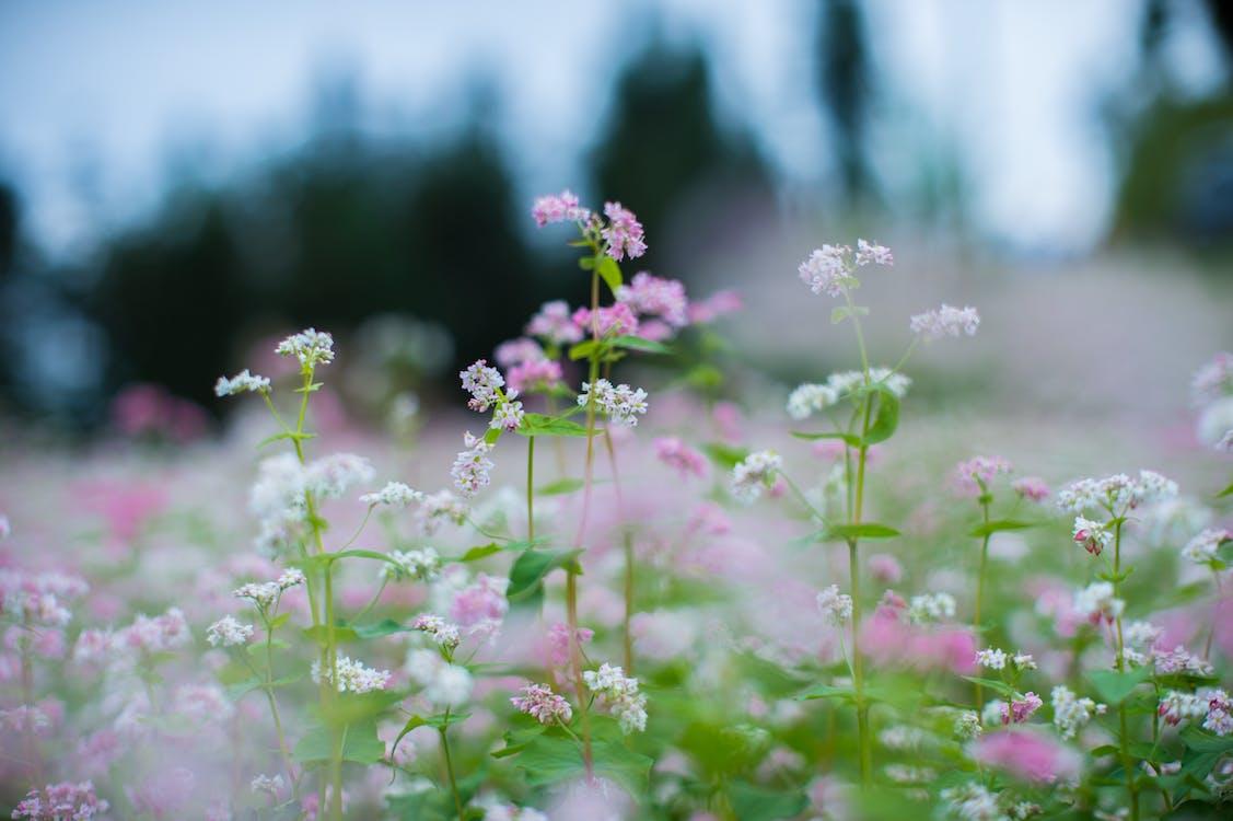 꽃, 꽃잎, 들판