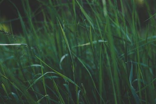 Δωρεάν στοκ φωτογραφιών με ανάπτυξη, γήπεδο, γρασίδι, περιβάλλον