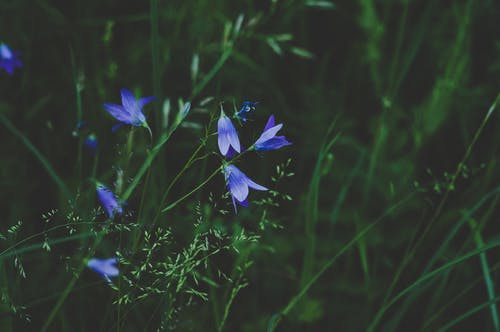 Selective Photo Of Blue And White Petaled Flower