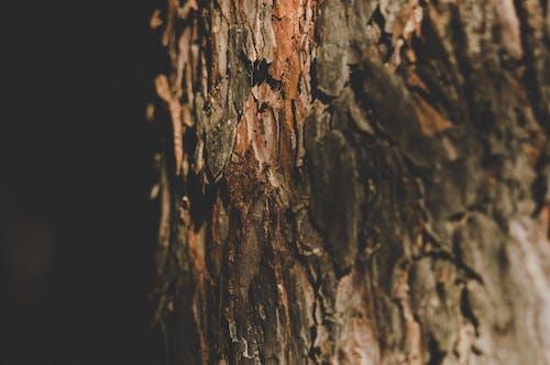 Gratis arkivbilde med bagasjerom, bark, grov, miljø