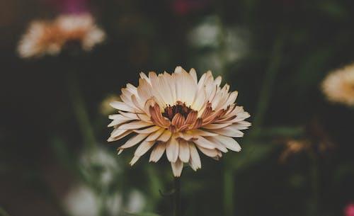 Darmowe zdjęcie z galerii z delikatny, flora, głębia pola, kwiaty