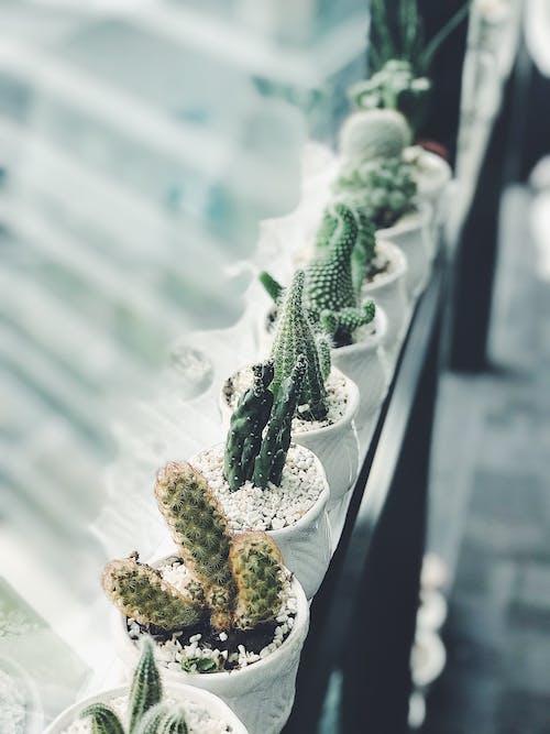 仙人掌, 刺, 廠, 植物 的 免費圖庫相片